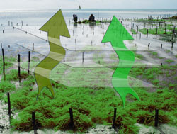 Seaweed - The High Humidity Permeability Problem